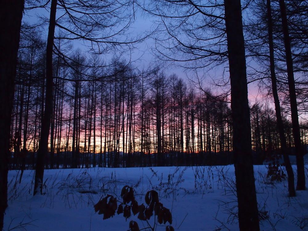 赤い夕陽に浮かび上がる防風林越しの日高山脈・・今日の夕暮れ_f0276498_13403751.jpg
