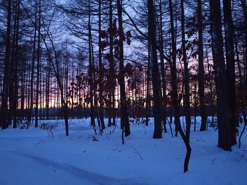 赤い夕陽に浮かび上がる防風林越しの日高山脈・・今日の夕暮れ_f0276498_1342123.jpg