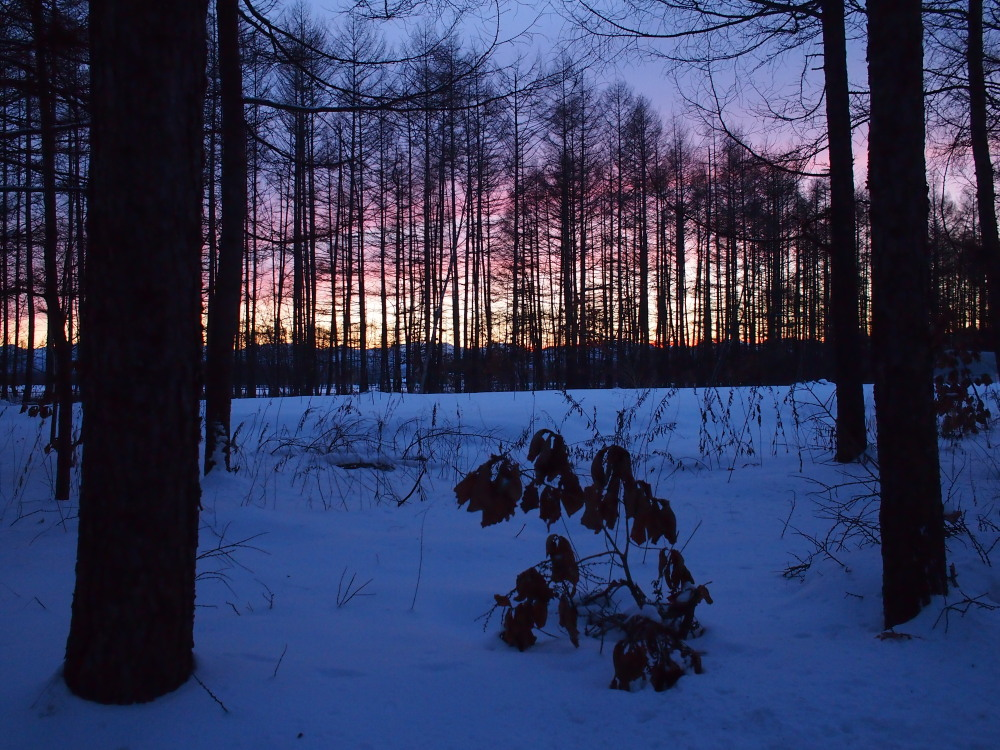 赤い夕陽に浮かび上がる防風林越しの日高山脈・・今日の夕暮れ_f0276498_13425218.jpg