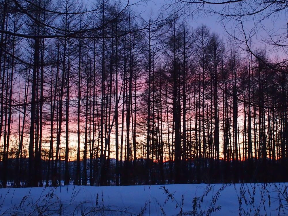 赤い夕陽に浮かび上がる防風林越しの日高山脈・・今日の夕暮れ_f0276498_13432933.jpg