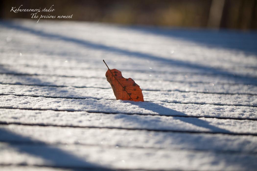 雪の無い冬_c0137403_16554055.jpg