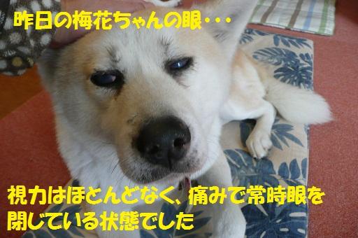 f0121712_1642317.jpg