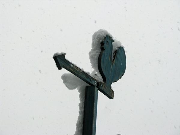 雪_f0129726_8251221.jpg