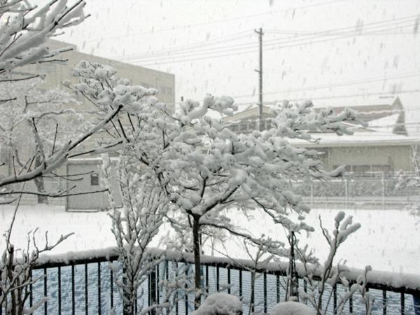 雪_f0129726_8295131.jpg