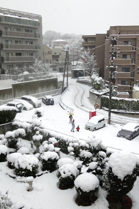 生駒は雪国!!!・・・白髭 _d0138130_11115141.jpg
