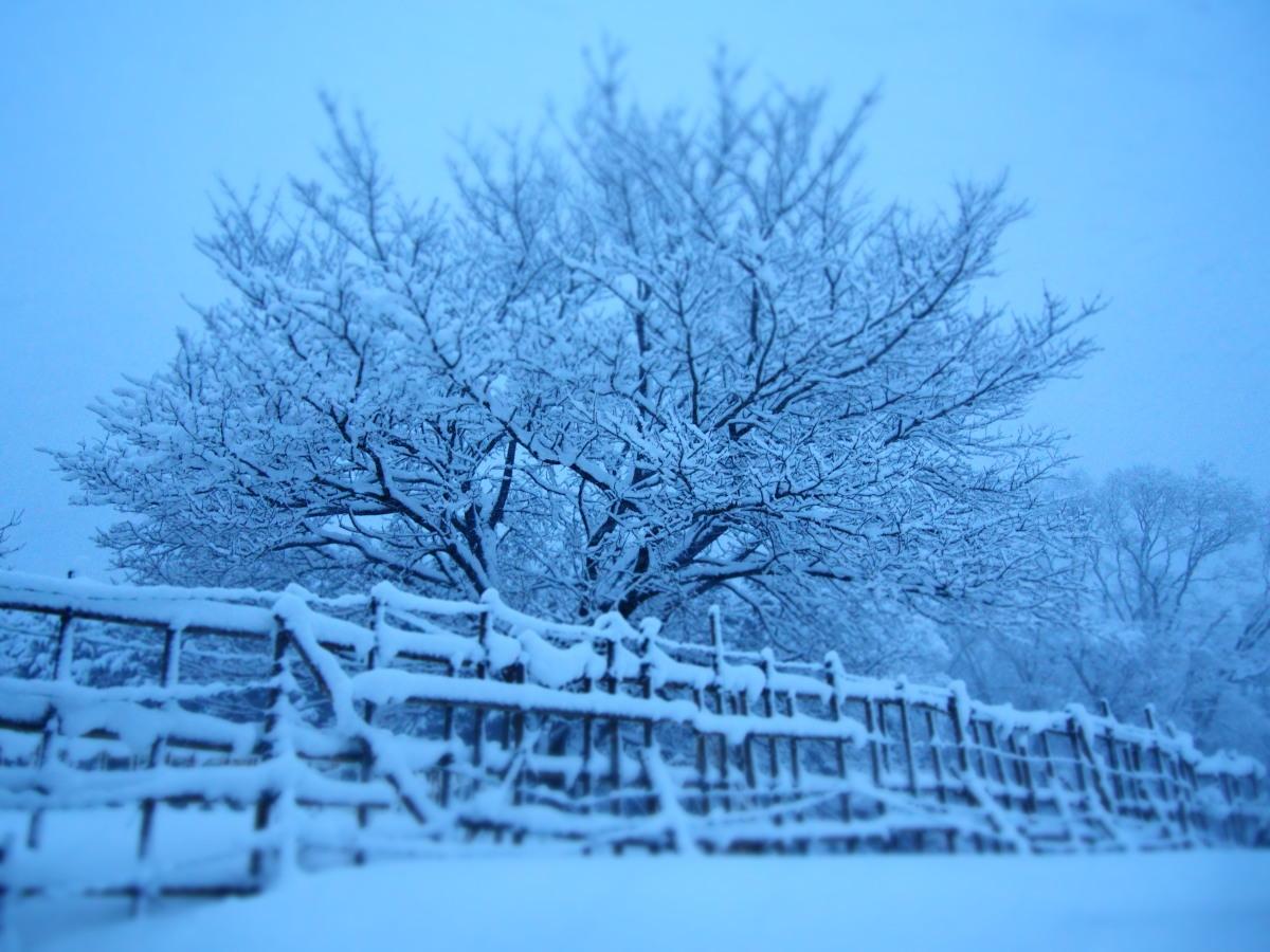 有難くない大雪_a0203733_18152962.jpg