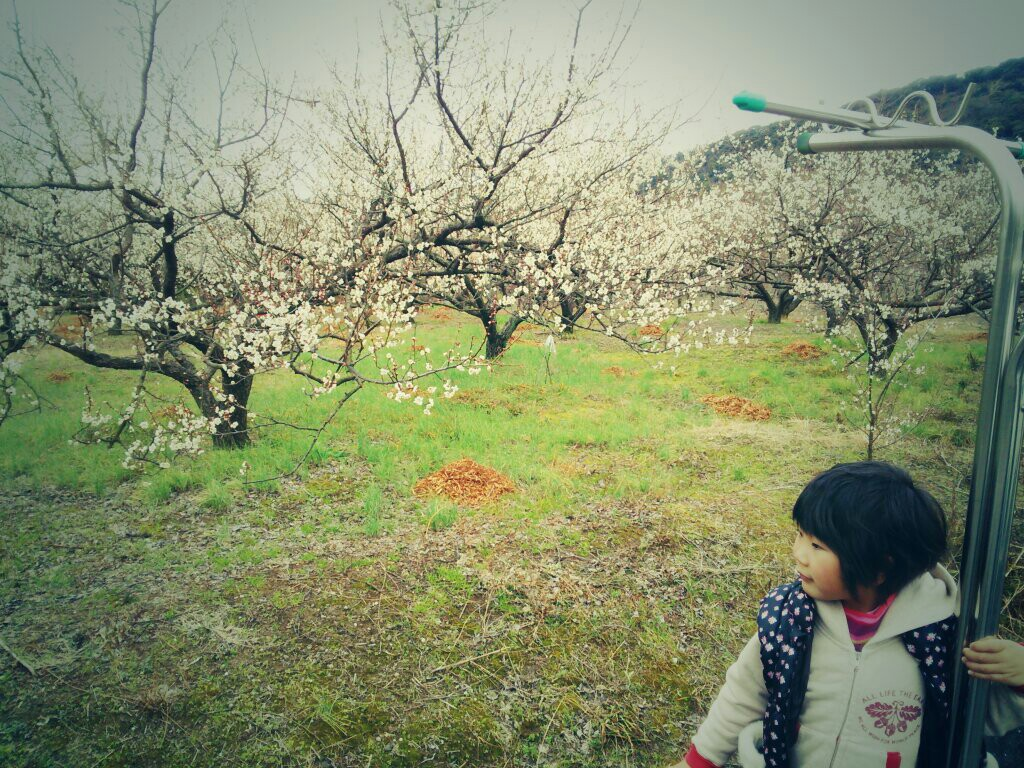 田辺のまち、ステキなまち、そして、熊野はええのう_c0010936_1361471.jpg