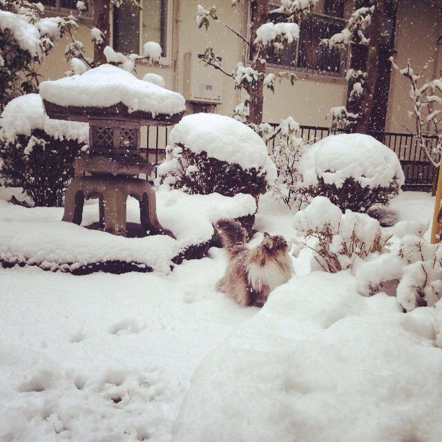 大雪のため臨時休業_d0210537_1018572.jpg