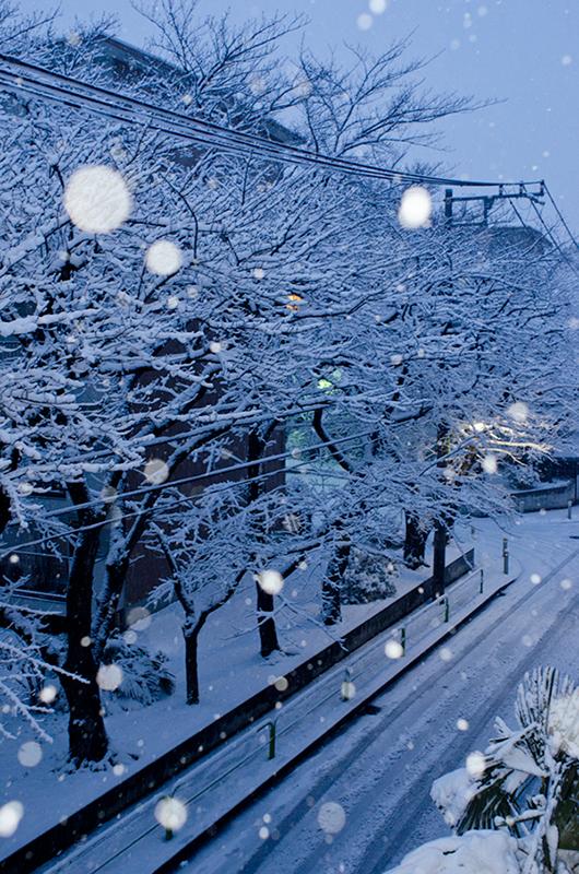 また雪の東京_a0003650_18531127.jpg