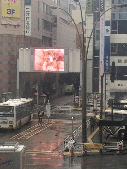 渋谷中央街大型ビジョンにうちの猫らムービー_a0028451_13172615.jpg