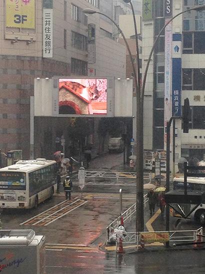 渋谷中央街大型ビジョンにうちの猫らムービー_a0028451_13181143.jpg