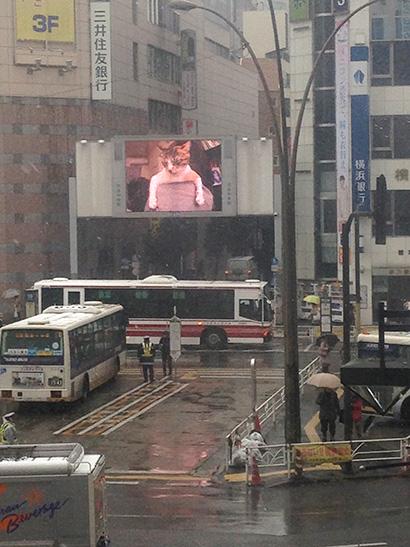 渋谷中央街大型ビジョンにうちの猫らムービー_a0028451_13183976.jpg