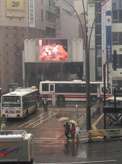 渋谷中央街大型ビジョンにうちの猫らムービー_a0028451_1319739.jpg