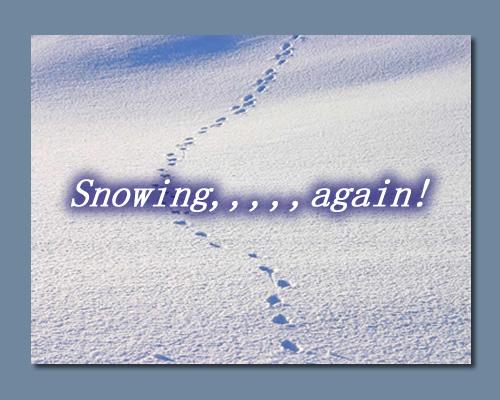 また!雪です・・・お知らせ_e0291354_10463132.jpg