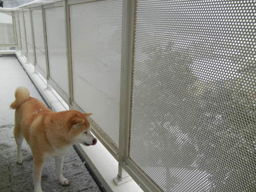 '14,2,14(金)また雪だよ~!羽生君すご~い!_f0060461_11412422.jpg
