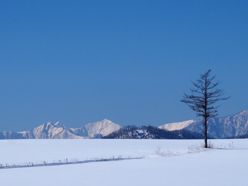 """快晴の雪原越しに望む""""カムイエクウチカウシ山(日高山脈)""""_f0276498_1226471.jpg"""