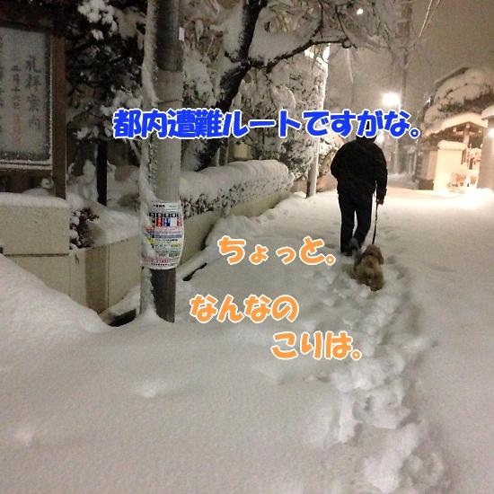 b0067012_4225911.jpg