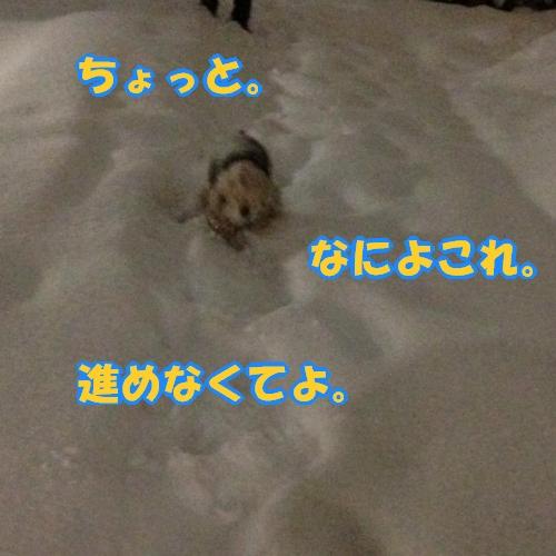 b0067012_431379.jpg