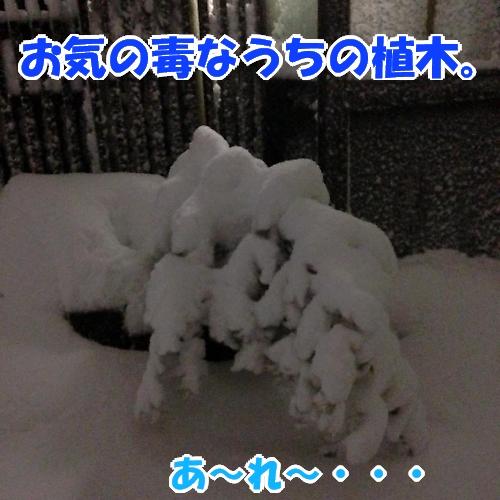 b0067012_4401215.jpg
