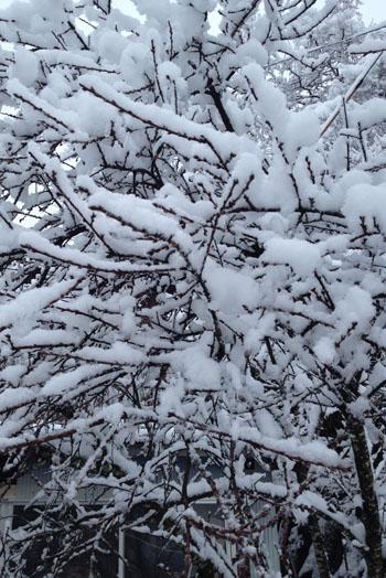 雪!!_b0165512_18381380.jpg
