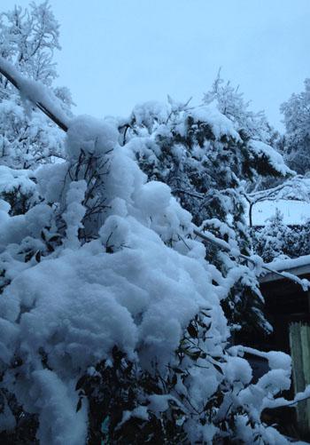 雪!!_b0165512_1838374.jpg
