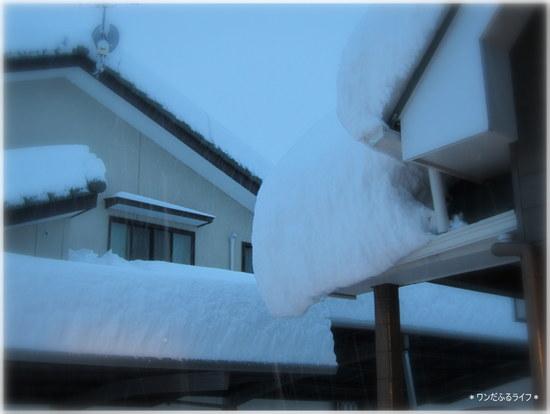 *118年ぶりの豪雪!!*_d0317115_23464049.jpg