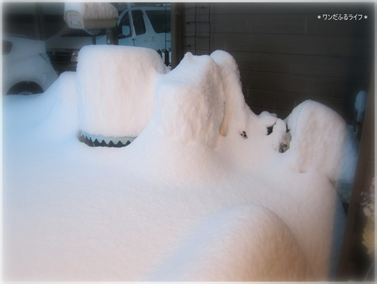 *118年ぶりの豪雪!!*_d0317115_23473691.jpg