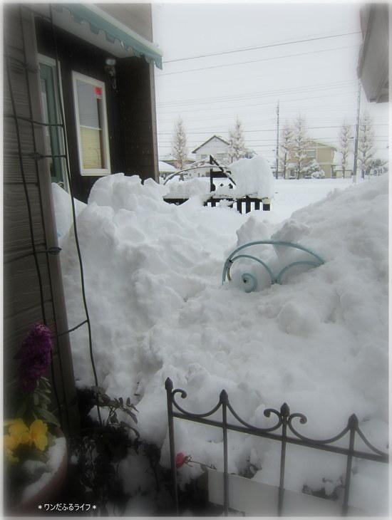 *118年ぶりの豪雪!!*_d0317115_2347756.jpg