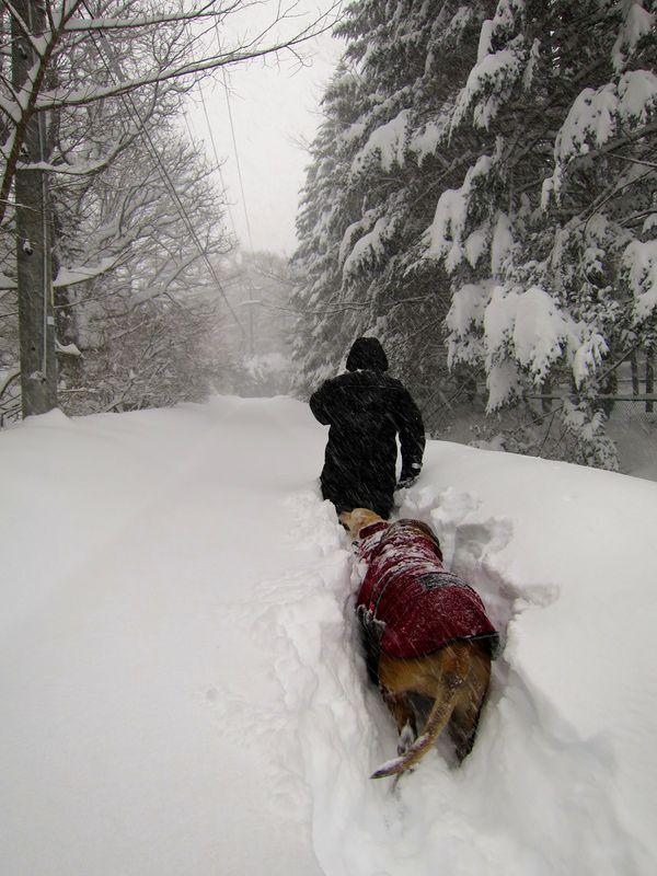 ドカ雪です。_e0192217_1442547.jpg