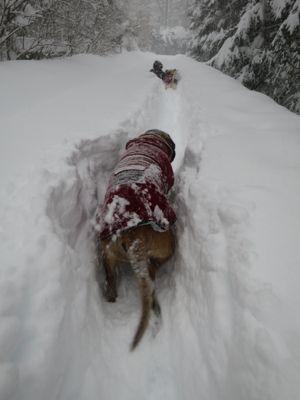 ドカ雪です。_e0192217_14452558.jpg