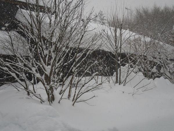 ドカ雪です。_e0192217_14484630.jpg