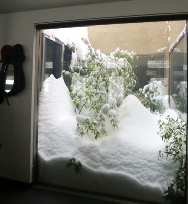 ドカ雪です。_e0192217_1449377.jpg