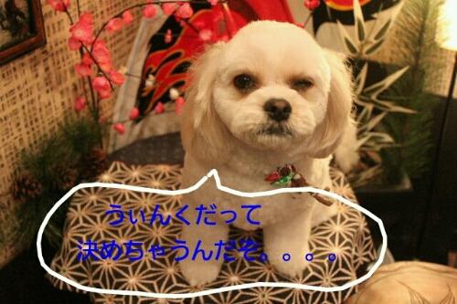 b0130018_2332973.jpg