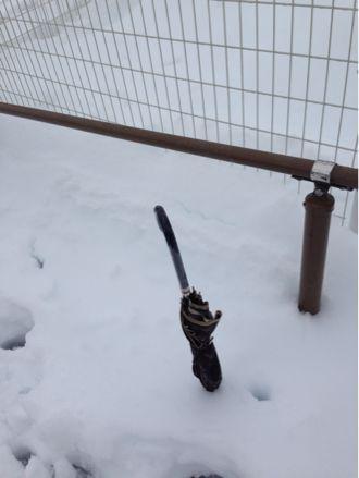 ここは雪国?!_b0203925_13205676.jpg