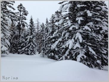 森の中でスノーシュー🎵_e0326953_17572430.jpg