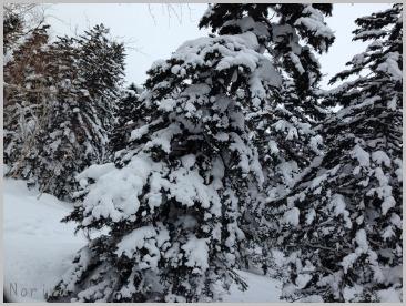 森の中でスノーシュー🎵_e0326953_17593333.jpg