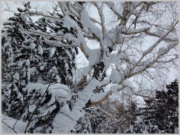 森の中でスノーシュー🎵_e0326953_1815070.jpg