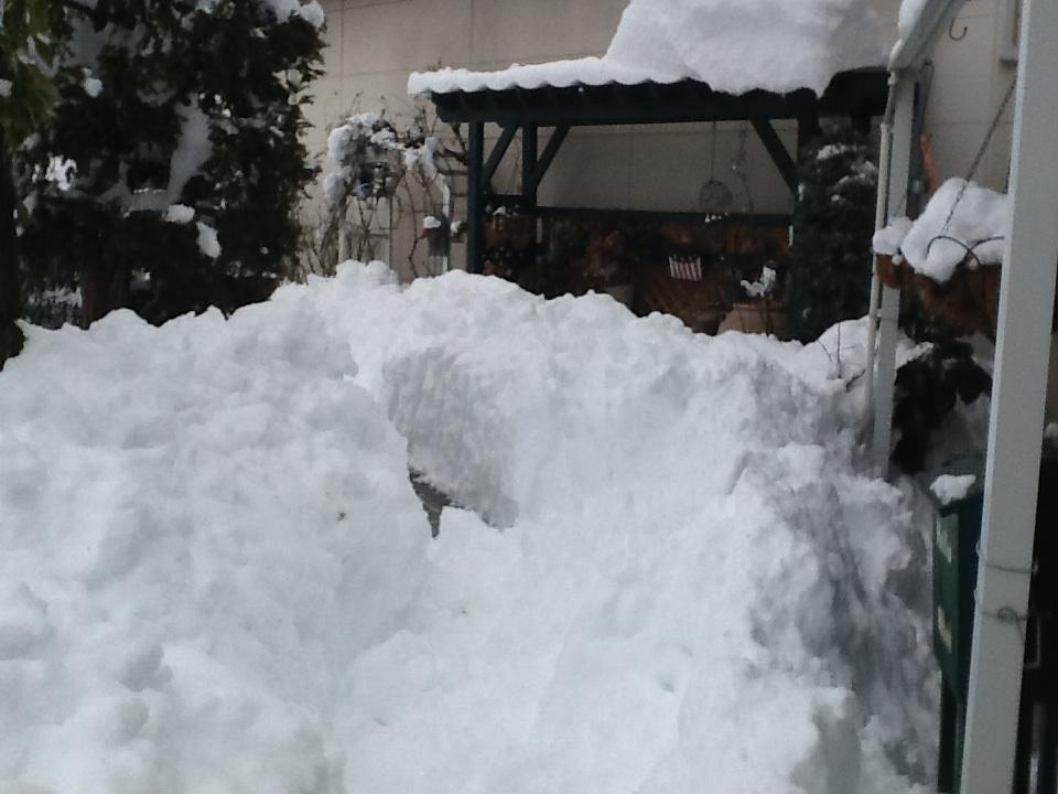 雪だらけ〜_f0303858_15112260.jpg
