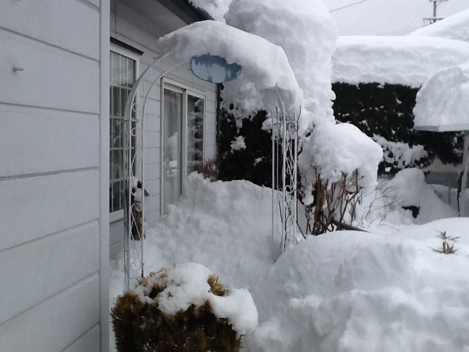 雪だらけ〜_f0303858_15113303.jpg