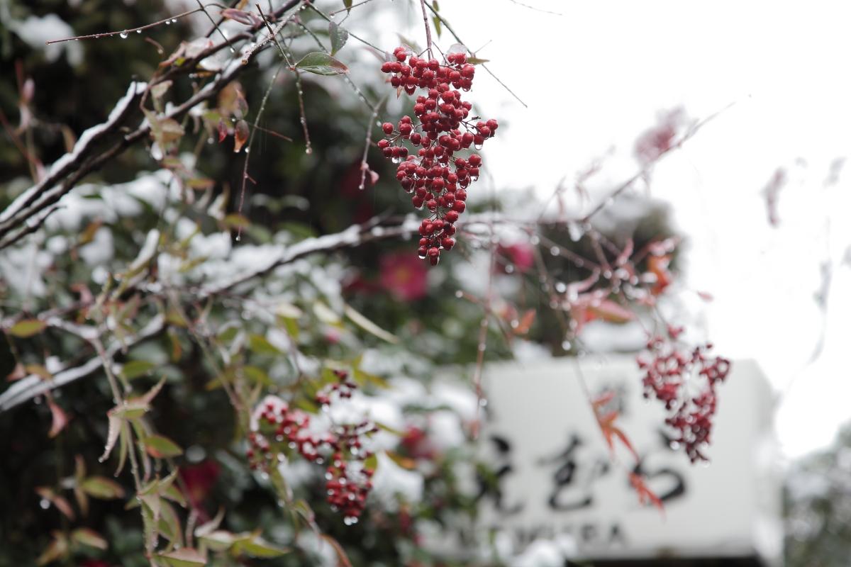 雪景色 2014 <東山>                        _f0021869_2340111.jpg