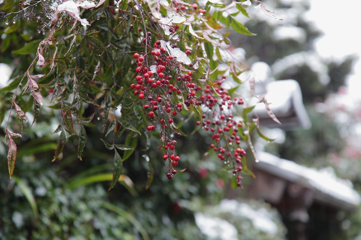 雪景色 2014 <東山>                        _f0021869_2340249.jpg
