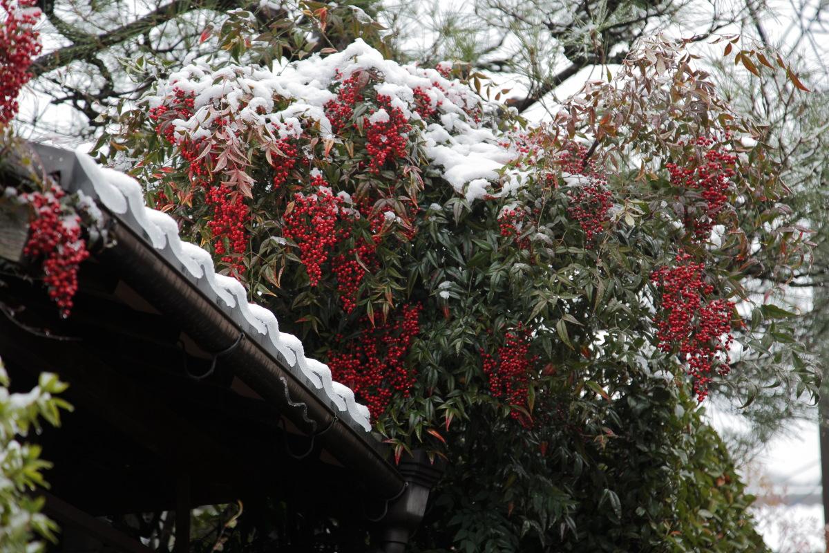 雪景色 2014 <東山>                        _f0021869_234096.jpg