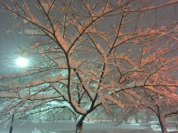 またまた大雪_b0219170_10351136.jpg