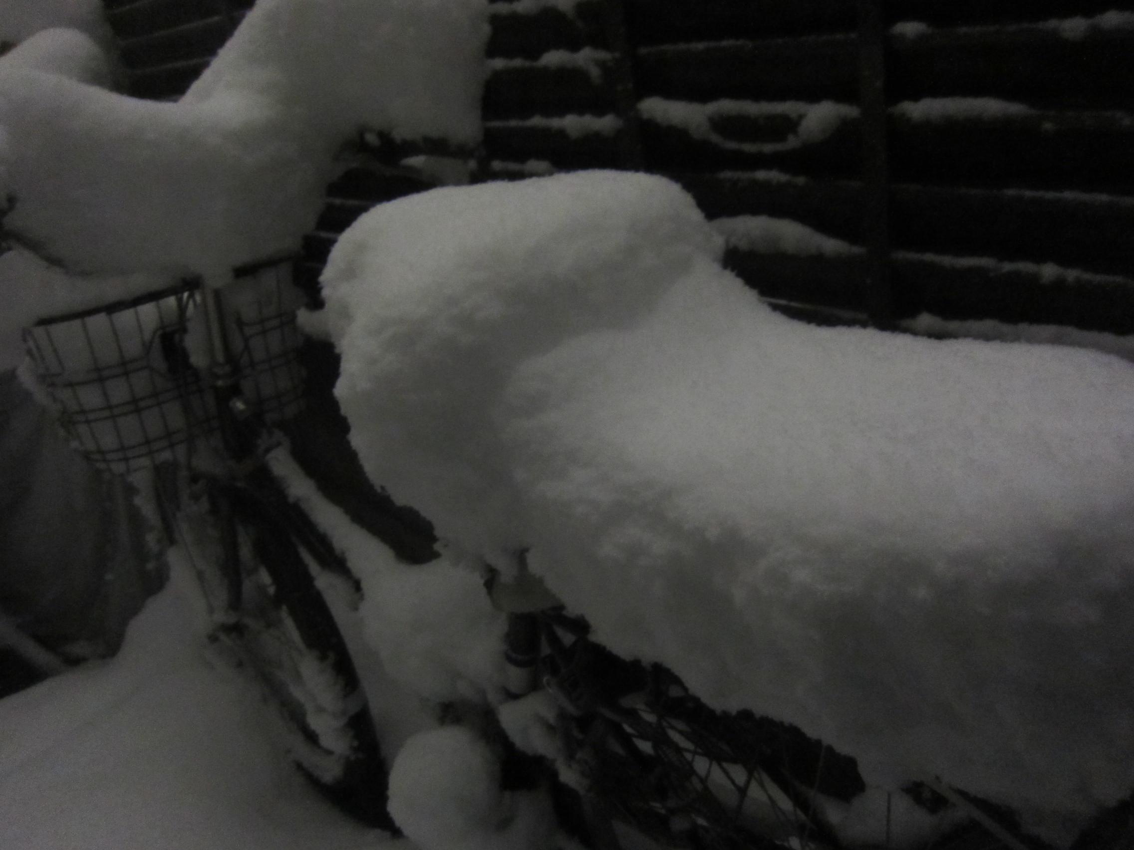 またまた大雪_b0219170_10453768.jpg