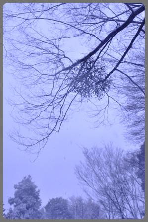 雪の日_c0187782_2123486.jpg