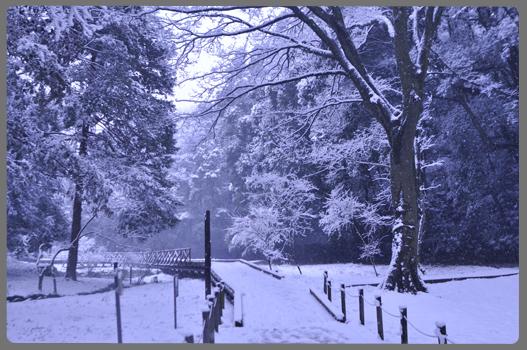 雪の日_c0187782_2124219.jpg