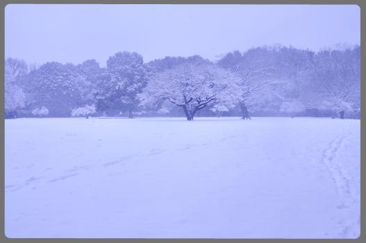 雪の日_c0187782_212496.jpg