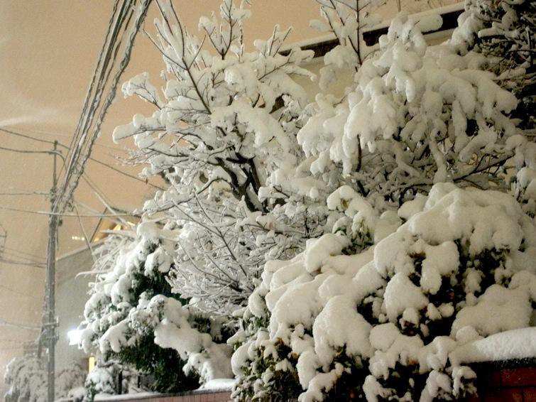 白東京。_b0118191_11143528.jpg