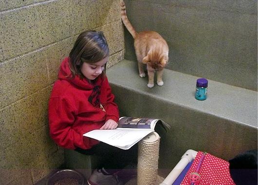 猫ちゃんに本を読み聞かせすると良い効果がある?! Book Buddies Program_b0007805_13584771.jpg