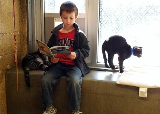 猫ちゃんに本を読み聞かせすると良い効果がある?! Book Buddies Program_b0007805_1404553.jpg